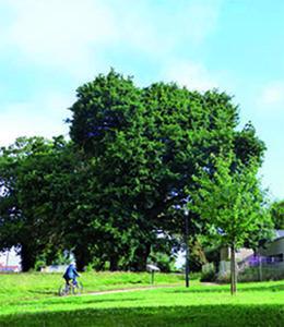 Chêne centenaire - Parc Delaroze à Aizenay